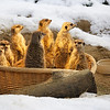 Cologne zoo in the snow : Animals in the snow, always fun.